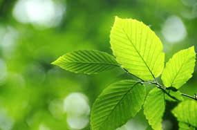 inomed Umweltschutz